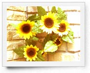peper-curl-flower018