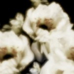 白い花(4パターン)