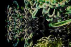 repeat-flower023