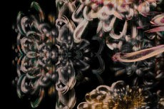 repeat-flower023_2