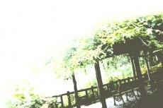 scenery105