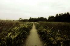 scenery175