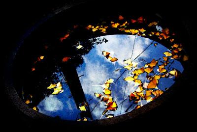 紅葉した葉が浮いている水溜り