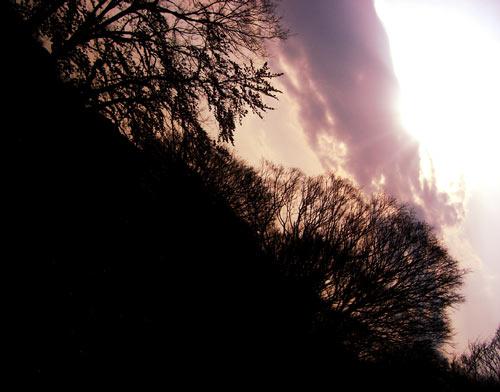 空と森の写真素材