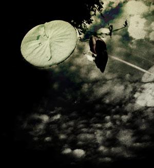 水草と水面に映る空