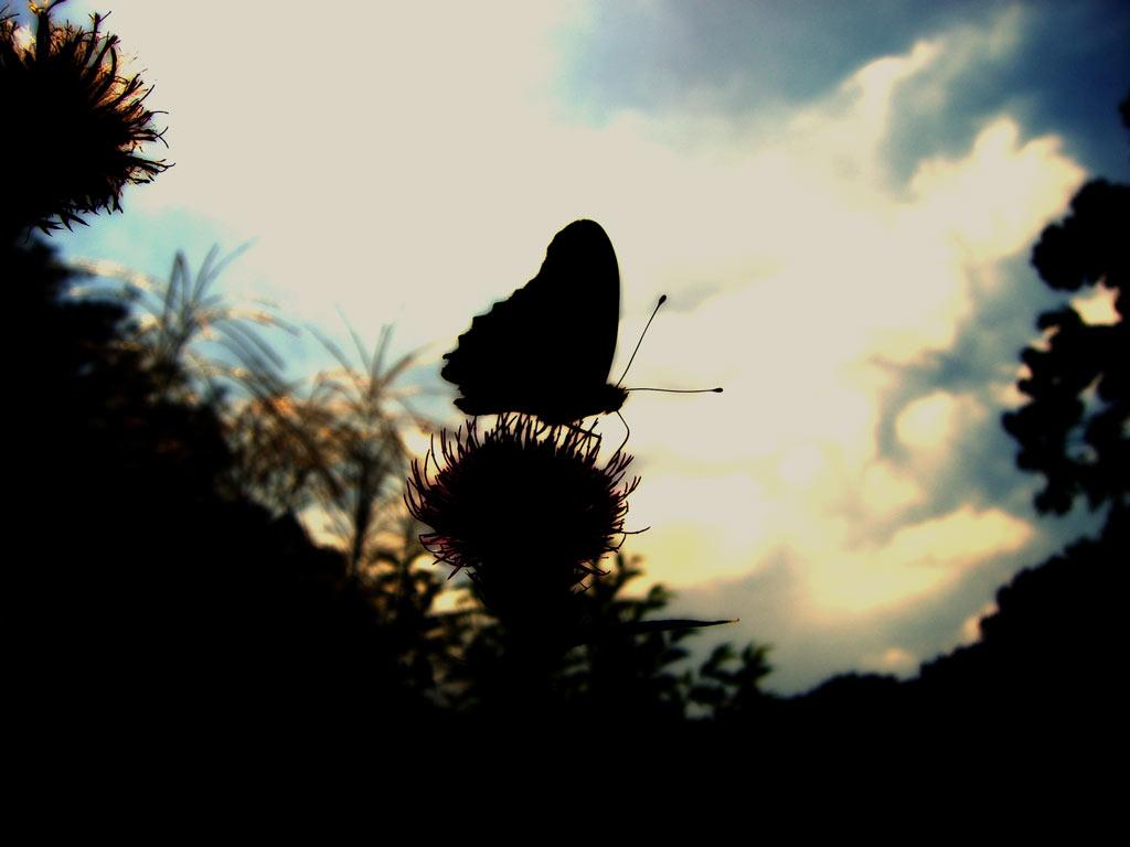 蝶と空の写真素材(2パターン)