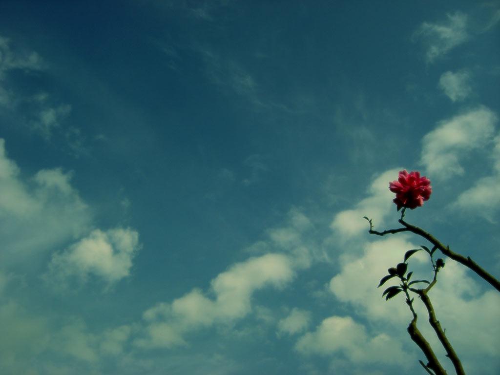 空と花の写真素材(2パターン)