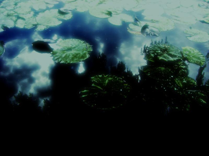 蓮池に映る空の写真素材