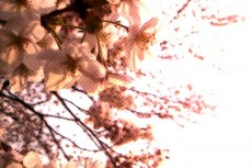 flower189