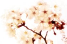 flower191