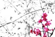 flower197