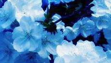 flower022