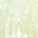 水彩画風の森(4パターン)