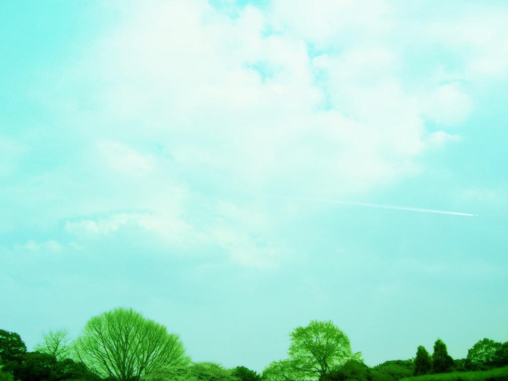 清々しい空と木の写真素材