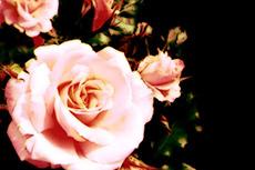 flower222