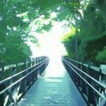 森の中の橋 差分:日中/夕方/夜