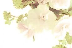 flower233