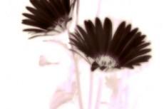 flower235