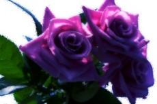 flower242