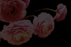 flower251