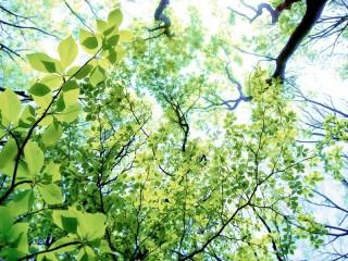 仰ぎ見る木の葉 差分:晴れ/霧/夕方