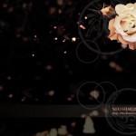薔薇のデスクトップ壁紙