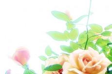 flower253