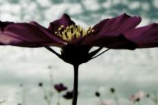 flower257