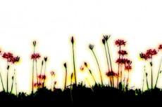 repeat-flower029