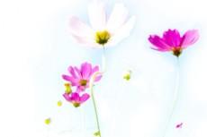 flower266