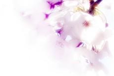 flower278