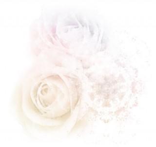 エレガントで淡い雰囲気の薔薇(4パターン)