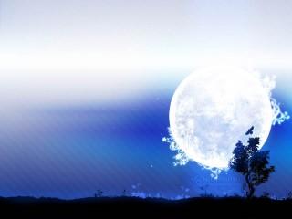満月と木のシルエットのデスクトップ壁紙