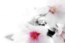 flower279