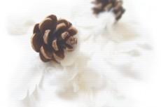 flower287