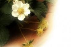 flower289
