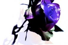 flower290