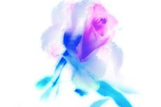 flower291