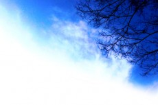 sky194