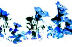 flower300