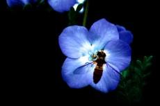 flower301