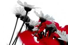 flower304