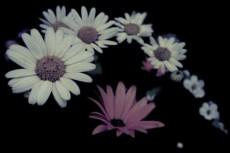 flower305