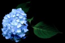 flower306