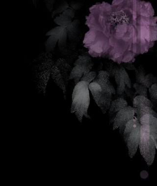 落ち着いた雰囲気の牡丹(ボタン)(4パターン)