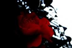 flower312