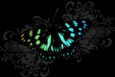 norepeat-butterfly011_3