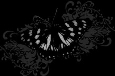 norepeat-butterfly011_4