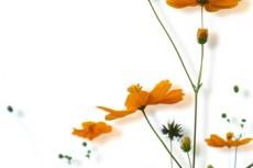 flower318