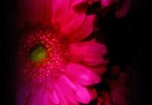 flower249